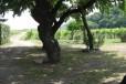 Agriturismo il Rovere3