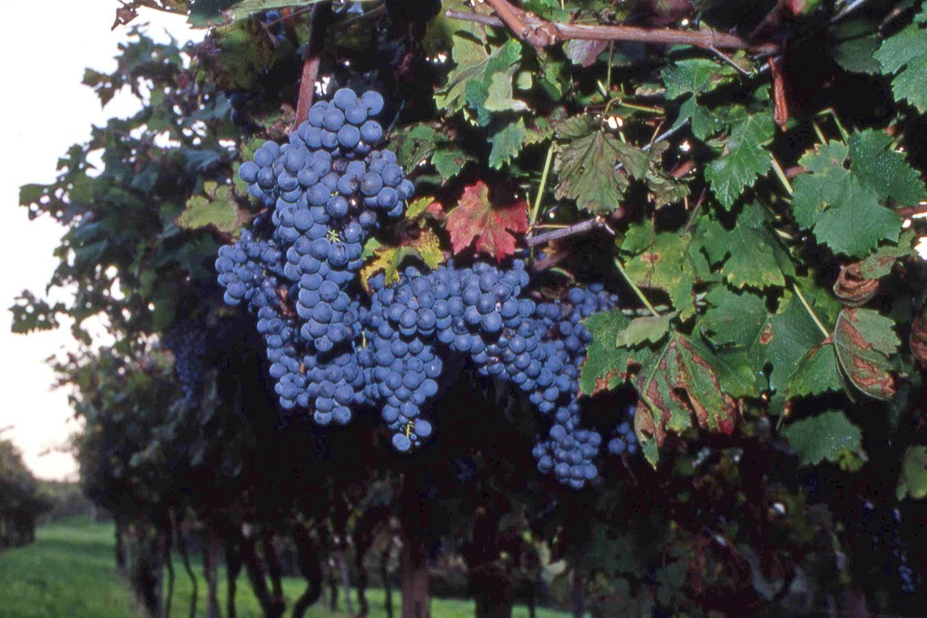 Azienda Vinicola Platter Cavriana62