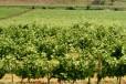Azienda Vinicola Platter Cavriana14