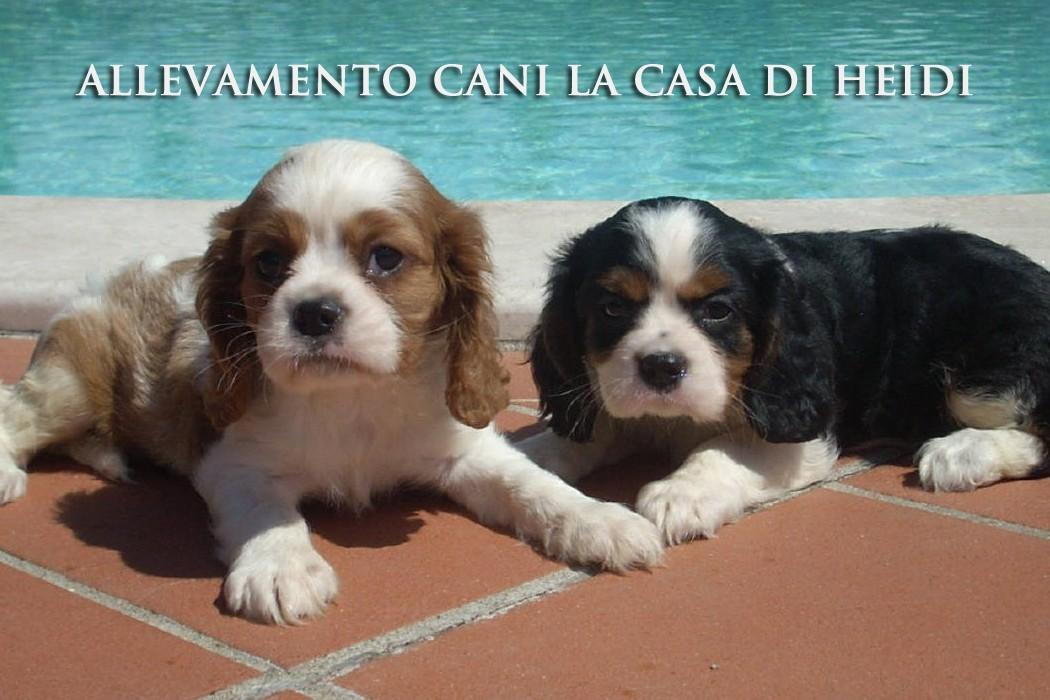 Allevamento Cani Brescia Polpenazze